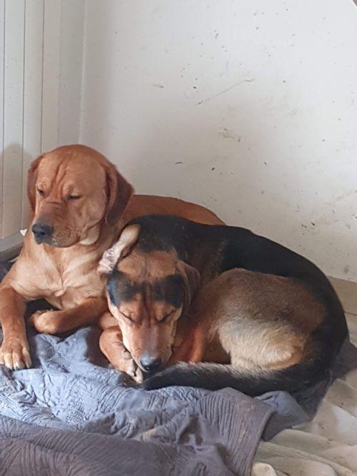 Pablo et Tyson