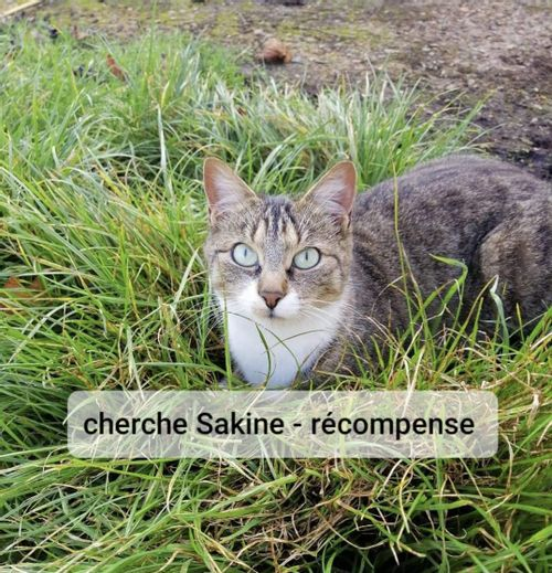 Sakine