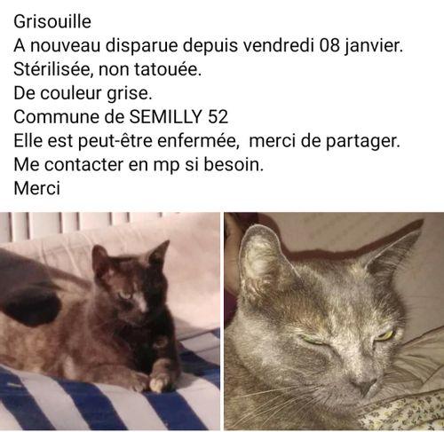Grisouille