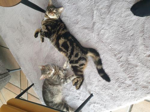 Rose et Félix