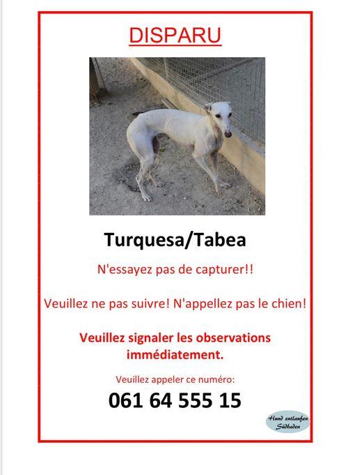 Tabea Turquesa